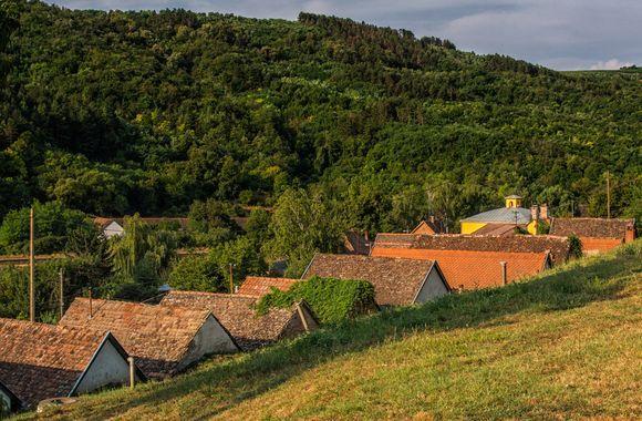 roofs of vinecellars