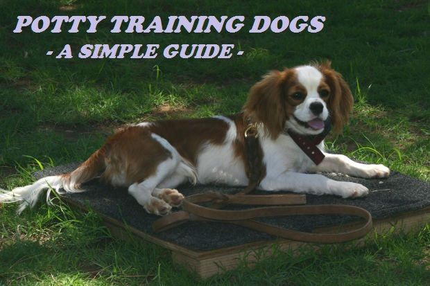Potty training dogs a simple guide training potty for Dog potty training problems