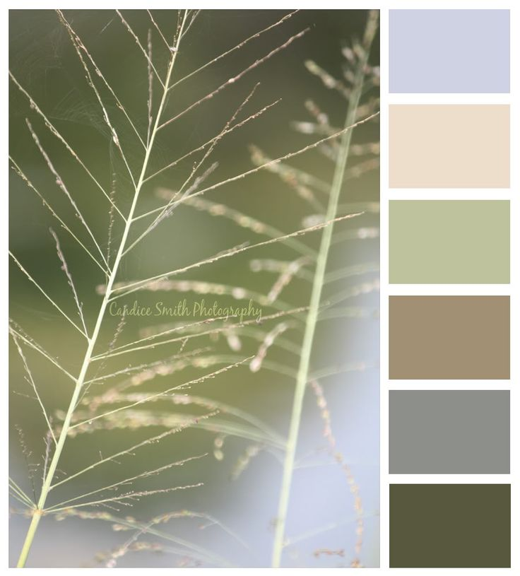 Untitled color palette