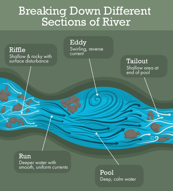 Where's That Trout? Learn How to Locate Trout in a Stream