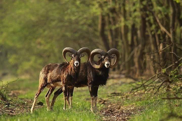 Stránka, na ktorej môžete ľubovoľne zdieľať všetko, čo súvisí so svetom lovu: - Fotografie lov monterias reklamy lovecké Rehal, knihy, psov, zbrane, preparovanie zvierat, obrazov, lovecké príbehy, atď