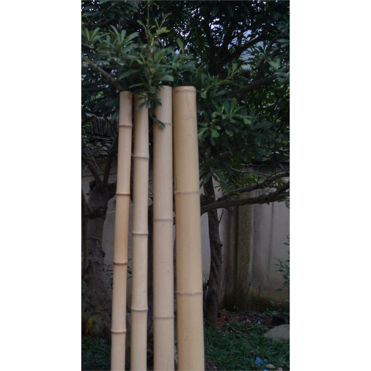 Best ideas about bamboo poles on pinterest