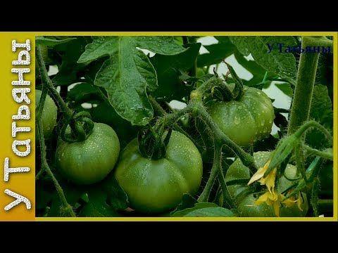 БОРНАЯ КИСЛОТА увеличивает урожайность: томатов, земляники, картофеля, свеклы и других растений. - YouTube
