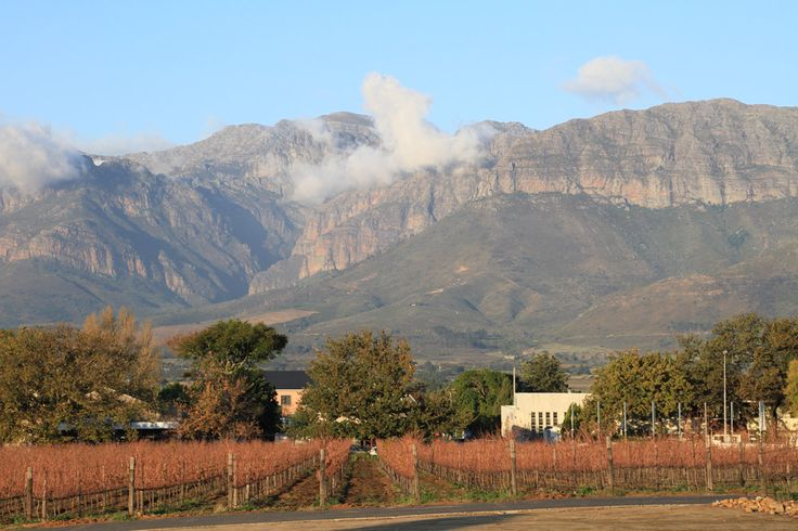 How to spend the week-end in Cape Town? Before going back home, taste the famous Pinotage, coming from the stunning Winelands around Cape Town.