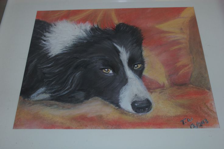 Pastel I did of Sawyer my sister in law and Brother's dog.