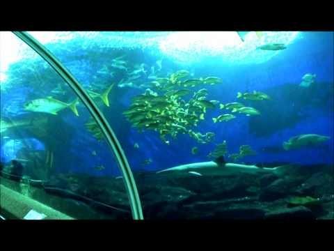 Under Water World Sentosa Singapore 3