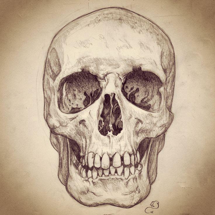 Pencil sketch of human skull