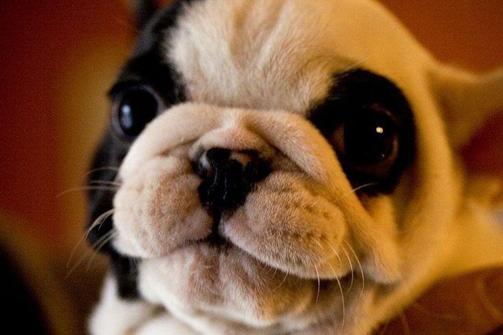 Nombre perro japones hembra significado No te pierdas este gran LISTADO DE NOMBRES PARA PERRA hembra en japonés con significado. Escoge un nombre original