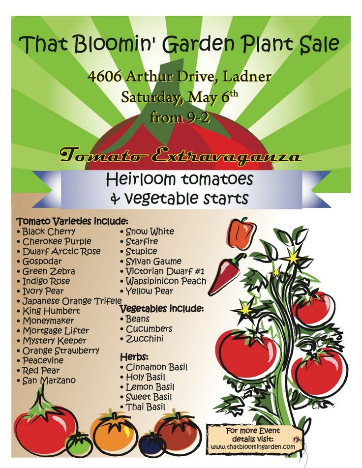 Join me for my annual plant sale in Ladner BC, I grew 500 heirloom tomato plants.
