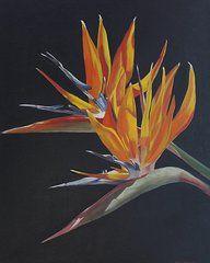 Featured Art - Birds of Paradise  by Bev Alldridge