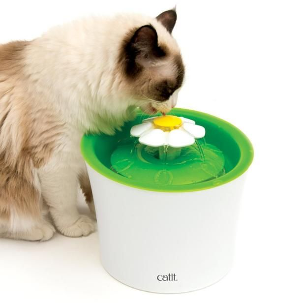 5 Things I Swear By As A Cat Mom Cat Water Fountain Cat