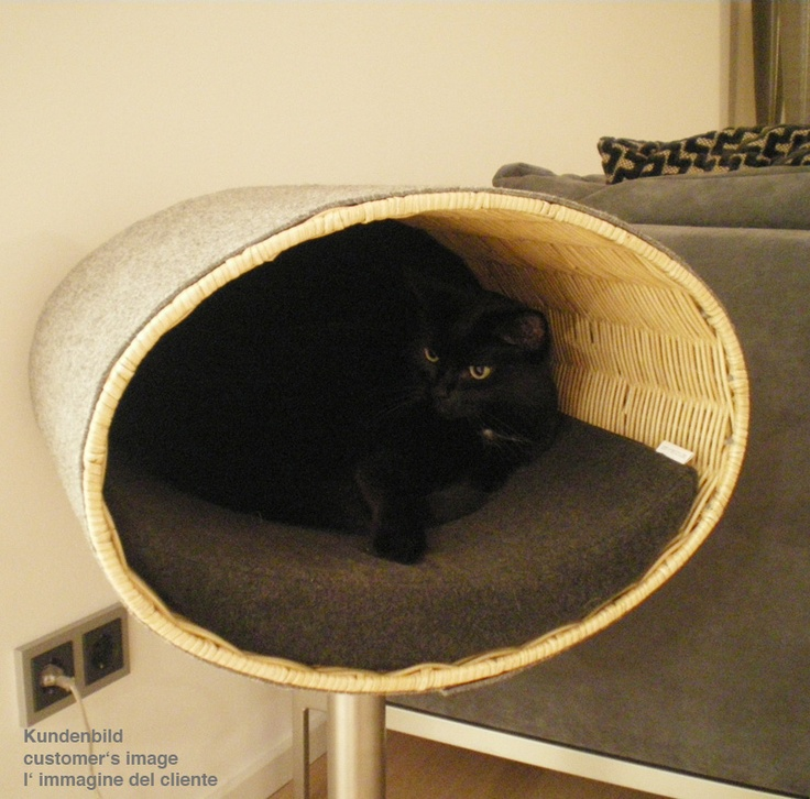 Rondo Modern Furniture For Cats, A Cat Scratch Post And Cat House.