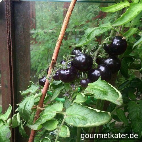 Schwarze Tomaten #tomaten #tomatoes #gardening