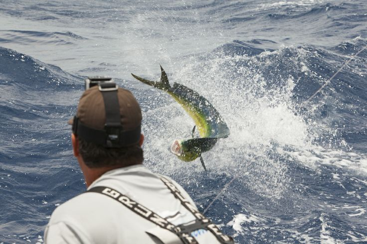 how to catch marlin fish