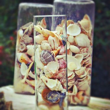 Top 25 ideas about seashell unit study on pinterest - Things to do with seashells ...