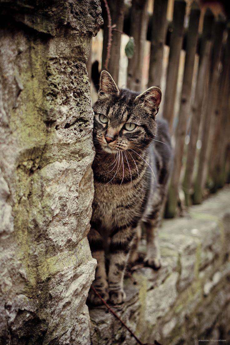17 Terbaik Ide Tentang Kucing Hitam Di Pinterest Kucing Anak