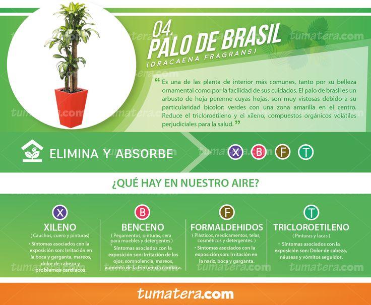 Encuéntralas en: https://www.tumatera.co/products/combo-mp-353553l-con-palo-de-brasil/