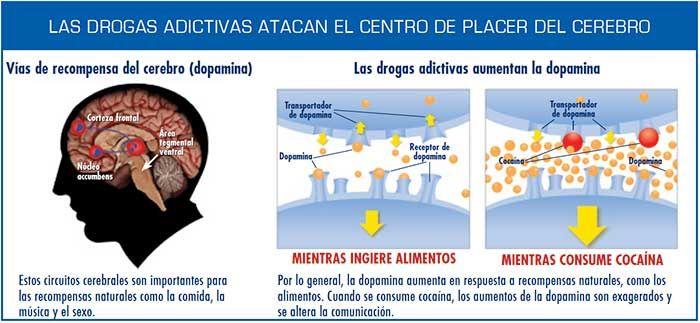 La mayoría de las drogas adictivas atacan el sistema de recompensas del cerebro, llenándolo de dopamina