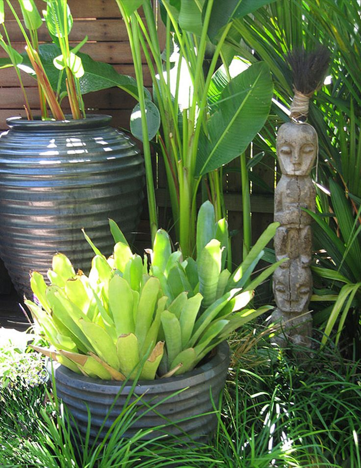 1000 Ideas About Tropical Gardens On Pinterest Gardening Tropical Plants And Landscaping