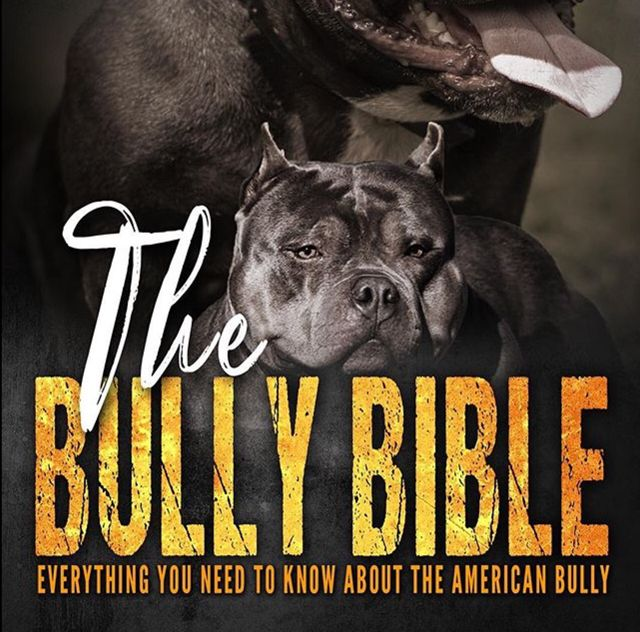 THE BULLY BIBLE: Everything You Need To Know About The American Bully • Now Available For Sale!  — The 1st American Bully Book w/Everything You Could Possibly Want to Know About The Breed All In One Place!  ✓ If You're A Bully Lover You Need This Book!  ✓ 31 Chapters   CHAPTERS INSIDE:      • Everything You Need To Know About The American Bully      • History Of The American Pit Bull Terrier