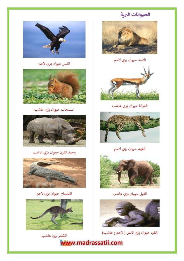 الحيوانات البرية العاشبة و اللاحمة موقع مدرستي