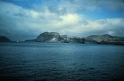 Guadalupe Island, Mexico--Great White Sharks!