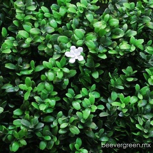 Distribuidor de follaje artificial para muros verdes. Privacidad y decoración de interiores o exteriores. Envíos a todo Mexico