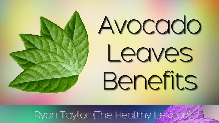 Avocado Leaves: Benefits and Uses