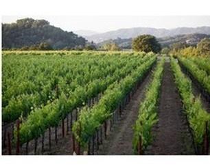 Sketchbook Wines - Visit Us