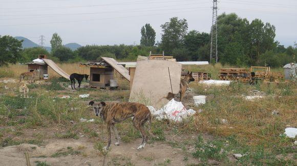 Petición · Controlen el chabolismo donde se encuentran perros en malas condiciones en toda la periferia de Vitoria-Gasteiz · Change.org