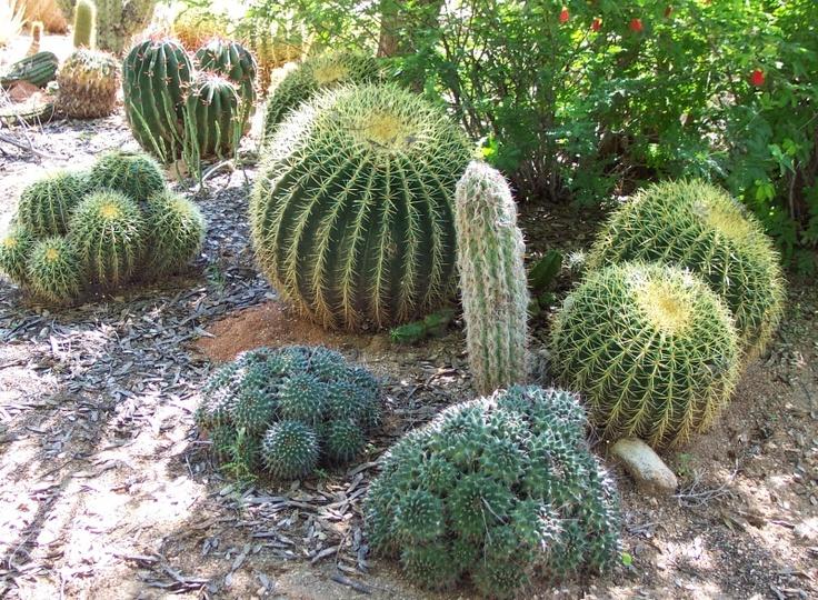 Las Vegas Planting