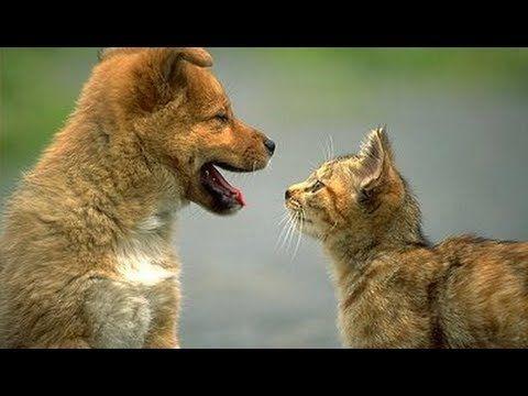 MIGLIORI VIDEO DI ANIMALI DIVERTENTI E TENERI (1°parte) - funny animals - YouTube