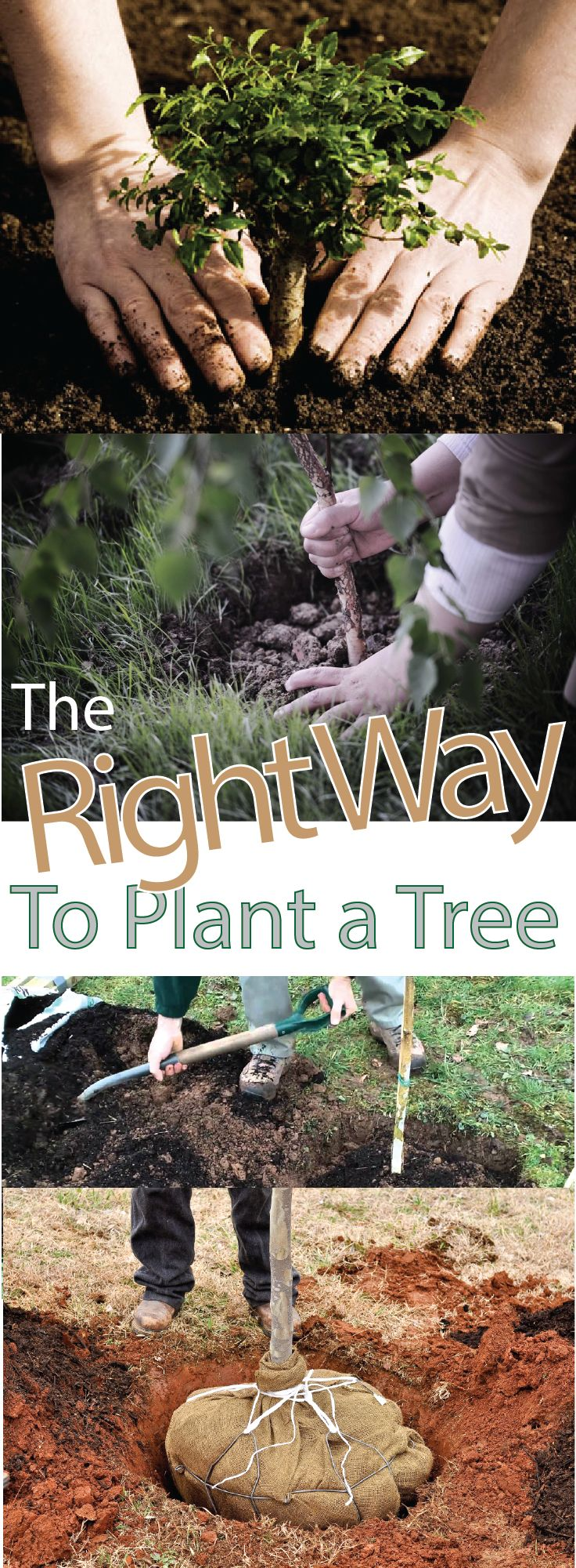 How To Plant A Tree – Making DIY Fun