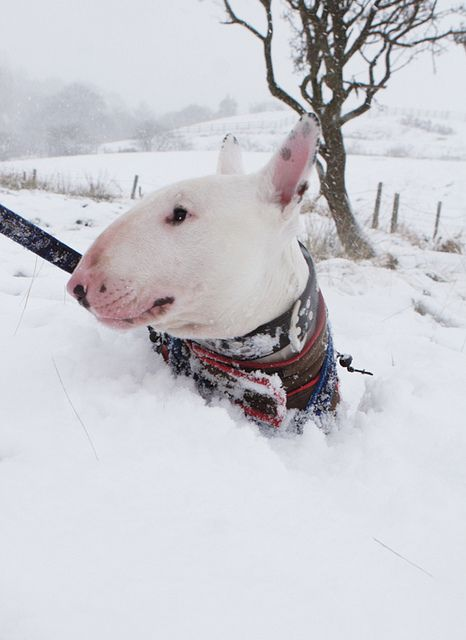 no relation to my two bullies...snow is a very dirty word here!