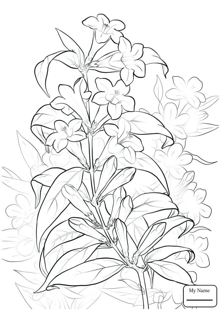 Jasmine Flower Coloring Pages Princess Jasmine Coloring Page