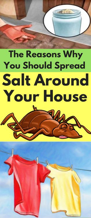 Reason Why You Should Spread Salt Around Your House for bugs for dry clothes fast clean the air and much more