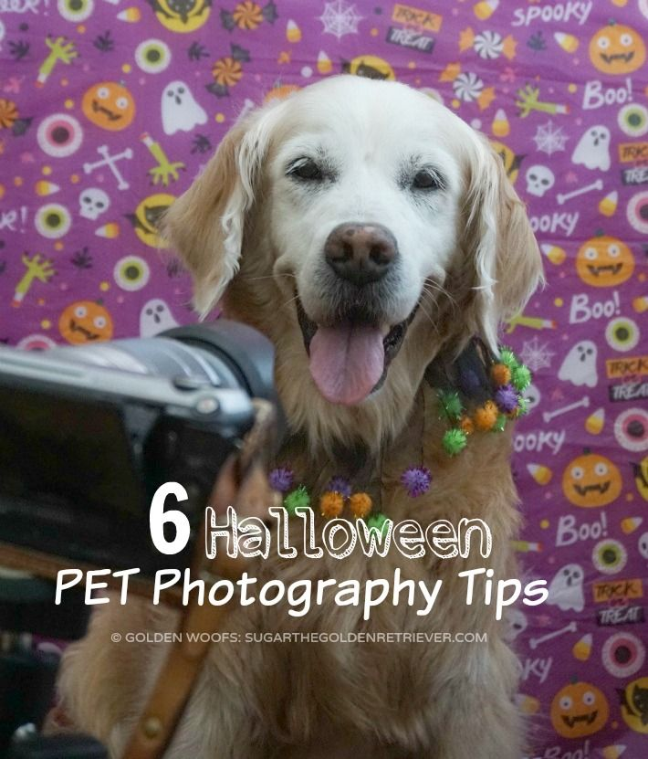 Halloween is also a great opportunity to have a good time taking photographs of your pet. Sharing 6 Halloween Pet Photography Tips