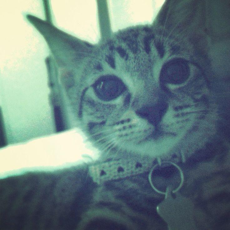 meowl x