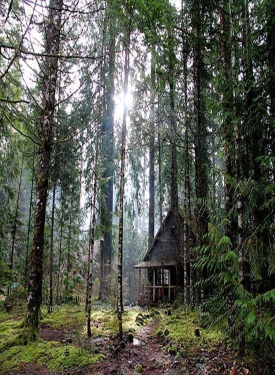 Best 25 luxury cabin ideas on pinterest norwegian style for Cabin in the woods oregon