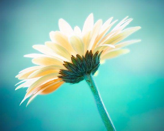 daisy very pretty I love the aspect