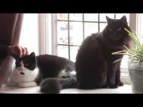 Dog, Cat & Multi-Pet Insurance - Argos Pet Insurance   Cat ...