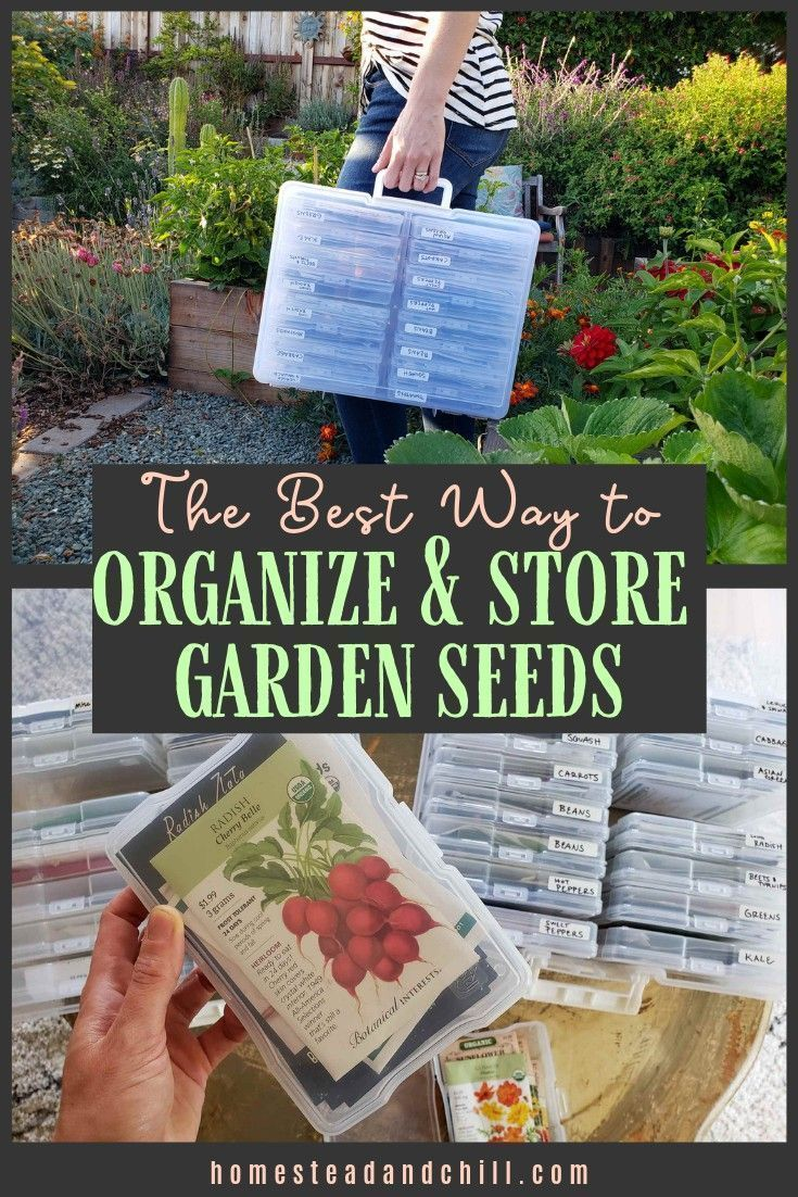 The Best Way To Organize Store Your Garden Seed Packs In 2020