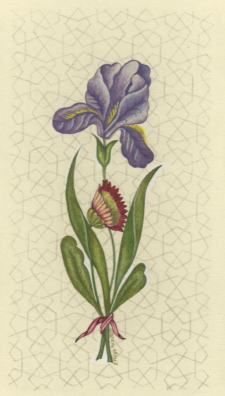 Hülya Aziz-Süsen, 2009. #hulyaaziz #art #flower #iris #miniature #drawing #illumination