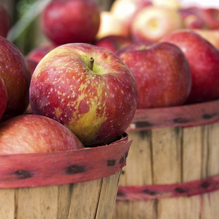 Apple season is in full swing here in the northeast! My kids fill up with anticipation this time of year for our annual trip to the apple orchard to go apple picking. I love it, too, because I get the...