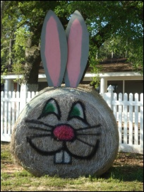 ...from hay 'in the field' to Easter bunny... #10MINUTEWOW #DELMONTECONTEST