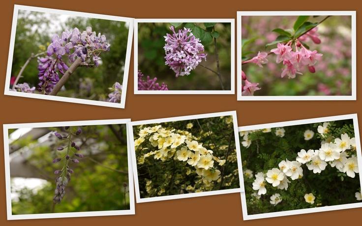 Beauty in Beijing Plant Garden (5)
