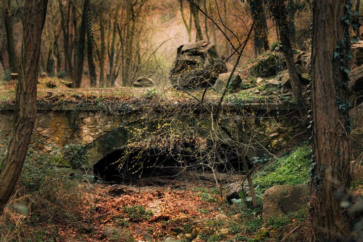 The hidden bridge by D. Totief on 500px
