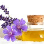 http://yldist.com/sunsetoils #lemon#oil#oils#essentialoils#health#organic#face#makeup#acne#brightening#stress#cellulite#sorethroat#badbreath#wellness#fitness#detox#youngliving#vibes#oilvibes