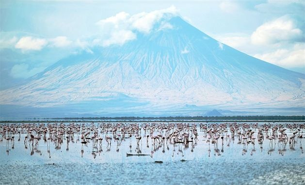 Flamingi w jeziorze Natron u stóp góry Ol Doinyo Lengai w Tanzanii, 30 września. Fot. TONY KARUMBA/AFP/EAST NEWS