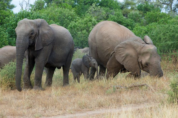 Elephants @ Santhata with small baby